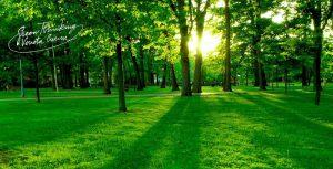 standard_green_thinking